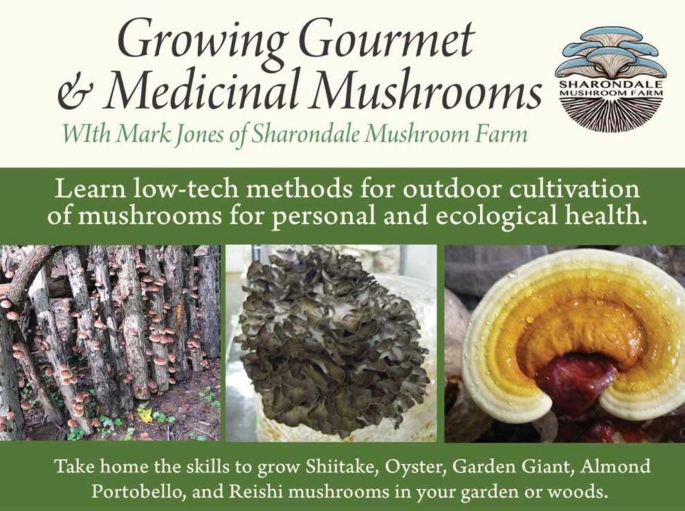 Mushroom-Workshop-web